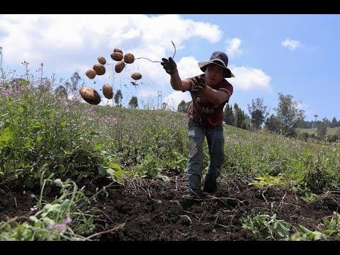 رغم تفشي كورونا.. مزارعون يواصلون أعمالهم في أمريكا اللاتينية  - نشر قبل 12 ساعة