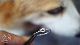 How To Make A knot ring / 완전 쉬…