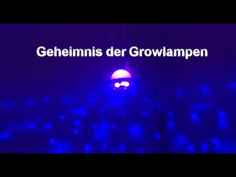 geheimnis-der-growlampen---die-rote-und-blaue-pille
