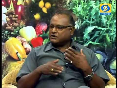 'Yashogatha-Spirulina Utpadan' _ 'यशोगाथा-स्पिरूलीना उत्पादन'