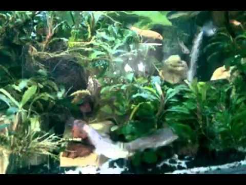 Akuarium Ikan Hias Paling Bagus Dan Cantik Youtube
