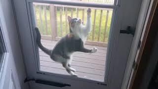 Cat Stuck in Screen Door thumbnail