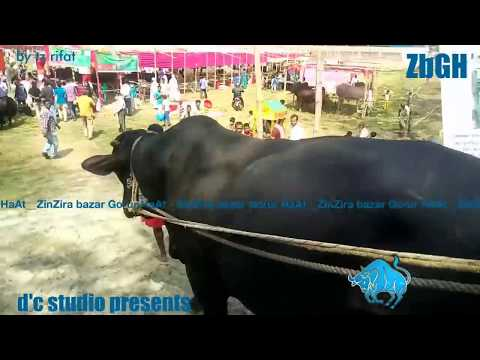 Bangladesh Government Cattle Show 2017 | Kala chan | Giant of Sharif Agro | vol.3 | ZbGH 2017