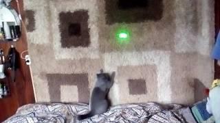Реакция кошки на точку от лазера