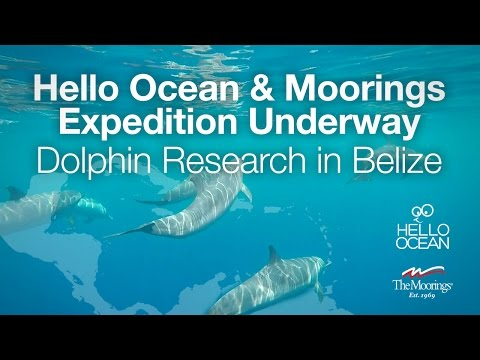 Hello Ocean: Expedition Underway - Important Dolphin Research in Belize