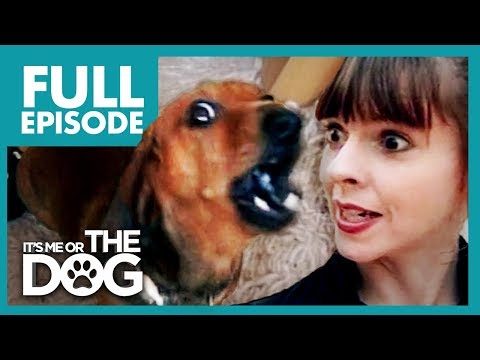 Miniature Dachshund With Big Attitude: Rufus 🌭| Full Episode | It's Me or The Dog