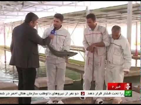 Iran Fars province, Caviar production from Fish farming pool توليد خاويار استان فارس ايران