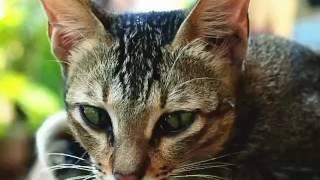 Котики: прикольные картинки😹