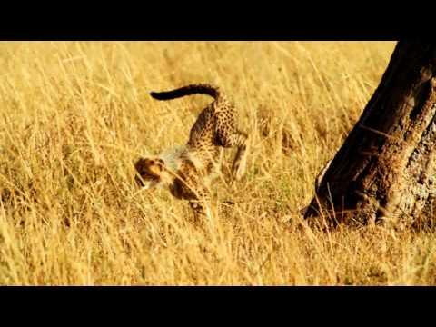 Serengeti   - Trailer