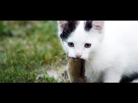 tiếng mèo kêu để đuổi chuột.