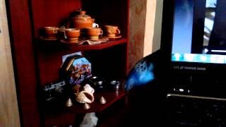funny video with a parrot  попугай играет в прятки ) волнистый попугай и ноутбук