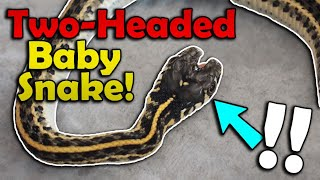 Our Snake Gave Birth to a Double-Headed Baby!
