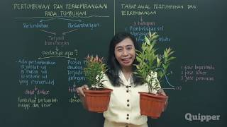 Quipper Video - Biologi - Pertumbuhan dan Perkembangan Tumbuhan [SMA]