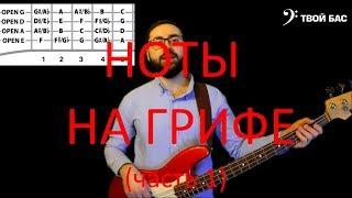 Ноты на грифе бас гитары (часть1)
