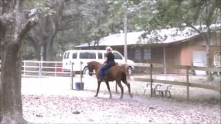 Sunny Tennessee Walking Horse 3 Beat Rocking Chair Canter