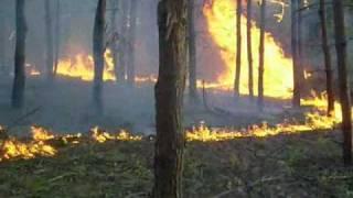 Pożar lasu w Łękach / k. Brzesko