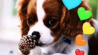 •Клички для собак•