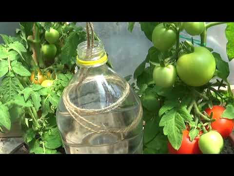 Plastic Bottle Drip Water Irrigation System with rope Very Simple and Fast