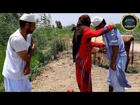 انظر ماذا فعلت تفاحه في الحاج مسعود بعد غلاء السولار / اضحك من كل قلبك/ كوميديا ضرب نار🔥🔥