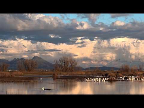 Sacramento National Wildlife Refuge Complex