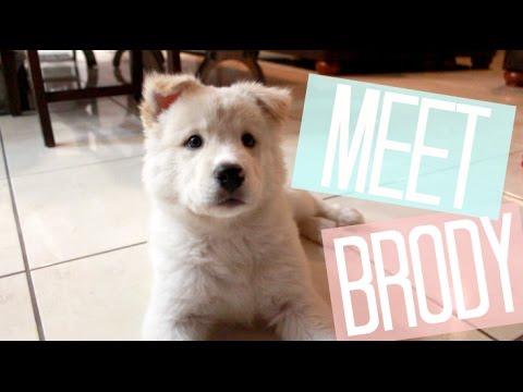meet-my-puppy!-|-misskyleesbeauty