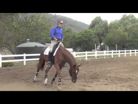 Schooling The Young Horse 1: Will and Feugo