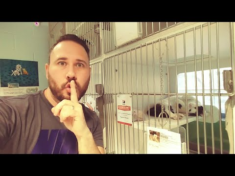 SECRETLY Filming DOG & CAT Shelter (VERY EMOTIONAL) The Omar Gosh Vlogs