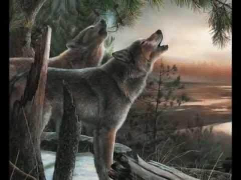 Les Loups Qui Hurlent à La Lune
