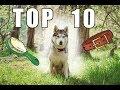 10 Best Tools for Huskies | Little Husky Voodoo