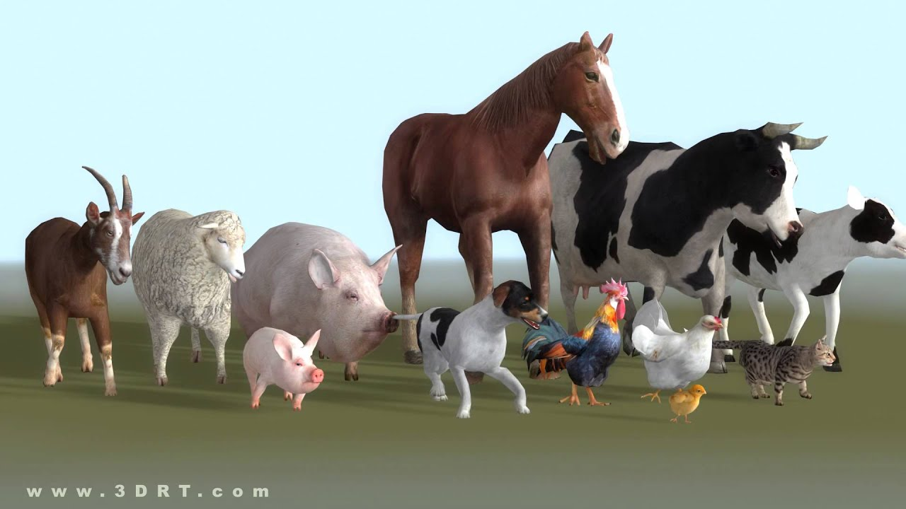 domestic animals 3d animated models pack
