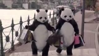Sydney Public Service Panda Ad