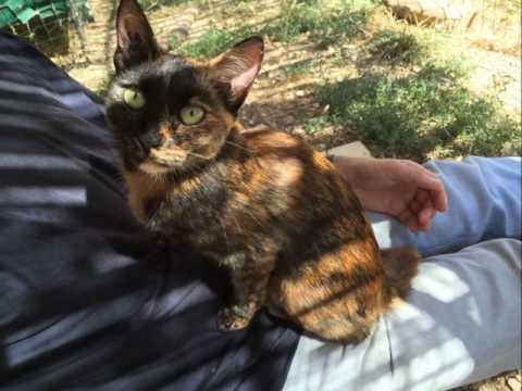 Clochette Adoptée :) Refuge Association chat libre Marseille