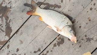 Днестр 46км карпы и караси рыбалка апрель рыбалка в дождь попали на клёв