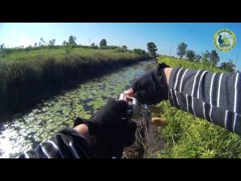 ตกปลาช่อนบ่อขุดหน้าดินกับกบลุงใหญ่ + กล้อง SJ4000 #2 (Fishing striped snakehead)