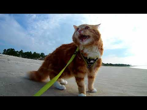 Taking my cat to the beach for the first time
