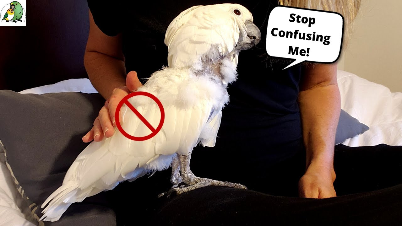 10 Things Birds Hate About Humans!