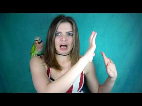 STORY TIME SUNDAY: The Parrot Scared Me In My er!