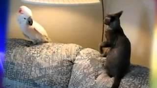 Начало боевых действий(Большая подборка приколов с животными. Можно смело смотреть всем. Смешные видео про животных. Атаки животны..., 2013-08-18T20:30:06.000Z)