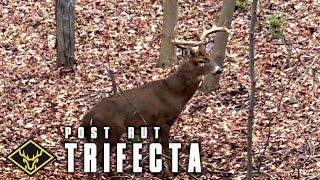 Post-Rut Trifecta: 3 Bucks called in!