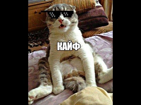 Когда кот под кайфом