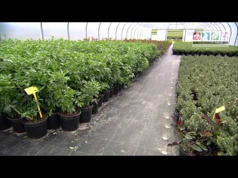 Top 10 Things You Need To Know To Start Growing Ornamentals