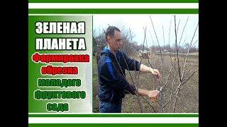 видео Лещина обыкновенная: посадка и уход, выращивание и размножение, болезни и удобрения