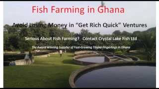 Fish Farming Investment in Ghana | 5 Ways to Lose Money | Tilapia Fish Farm Guide - West Africa