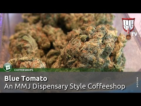 TOP CANNABIS COFFEESHOP: Blue Tomato in Hoorn, Holland - Smokers Guide TV Amsterdam