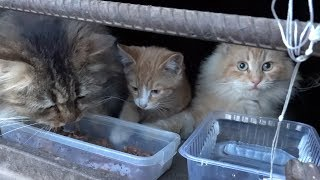 Hungry cats don't want to come out of the basement