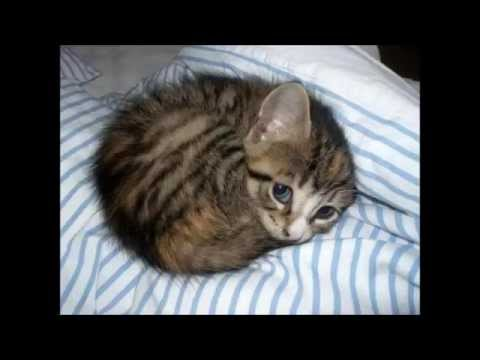 B b chat trop mignon youtube - Image de petit chat ...