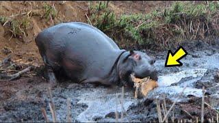 10 Batallas Animales que te Sorprenderán Ep. 11 | animales fuertes