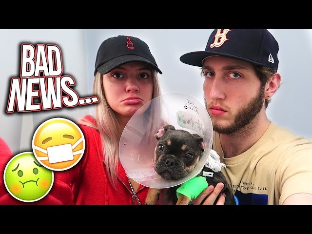Our puppy is sick... (bad news)