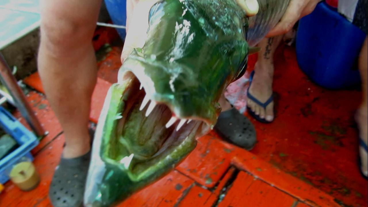 Тайланд. Паттайя. Морская рыбалка на барракуду и окуня. Ловля троллингом