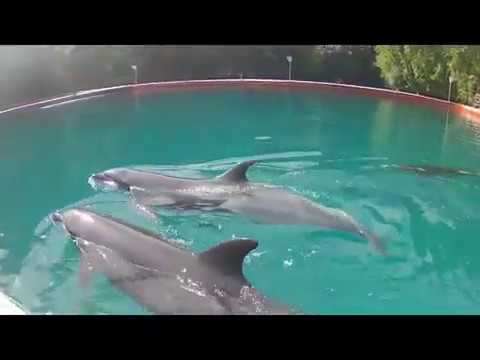 Palau - A visit to Dolphins Pacific